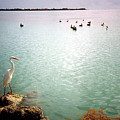 Egret On Marathon Key by Jeanne Russell