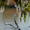 Egret On Stump by Dale Powell
