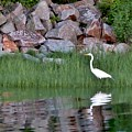 Egret On The Danvers River by Scott Hufford