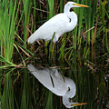Egret Reflection by Cindy Rose