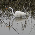 Egret Reflection by Judith Morris