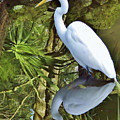 Egret Reflections by D Hackett