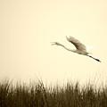 Egret Rising by William Haney