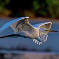 Egret Sunset by David F Hunter