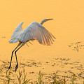 Egret Take Off 3 by Marc Crumpler