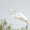 Egret-taking Flight by Keith Lovejoy