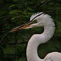 Egret With Branch by Paulette Thomas