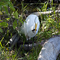 Egret With Crayfish by David Arment