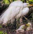 Egrets - 3362 by Paulette Thomas