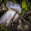 Egrets - 3399 by Paulette Thomas