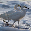 Egrets In The Shallows by Bruce Frye