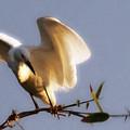 Egrets Landing by Linda Shafer