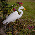 Egret's Meal by Zina Stromberg