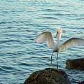 Egret's Rocky Landing  by Ola Allen