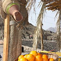 Egypt Oranges At The Oasis by Yvonne Ayoub