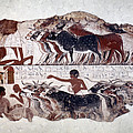 Egypt: Tomb Painting by Granger