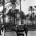 Egypt: Village by Granger