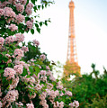 Eiffel Tower Paris by Songquan Deng