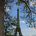 Eiffel Tower Tree by Chris Rigamer