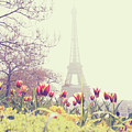 Eiffel Tower With Tulips by Gabriela D Costa