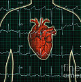 Ekg And Heart Over Torso by George Mattei