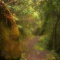 El Camino by Patrick Klauss