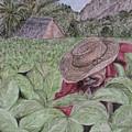El Campo De Tabaco by Roberta Shaughnessy