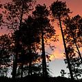 El Fuego De Santa Fe by Skip Hunt