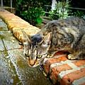 El Gato Iv by Becki Kremer