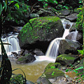 El Yunque National Forest Waterfall by Thomas R Fletcher