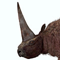 Elasmotherium Head by Corey Ford