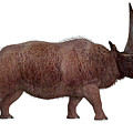 Elasmotherium Side Profile by Corey Ford