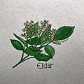 Elder by Elizabeth Hazelet
