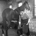 Elderly Blacksmith Shoeing Horse by H. Armstrong Roberts/ClassicStock