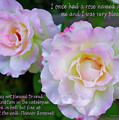 Eleanor Roosevelt Roses by Barbara Snyder