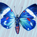 Electric Blue Moth by Mindy Lighthipe