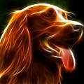 Electrifying Dog Portrait by Pamela Johnson