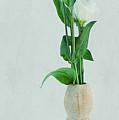 Elegant Lisianthus by Angela Doelling AD DESIGN Photo and PhotoArt