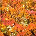 Elegant  Autumn by Jo-Ann Hayden