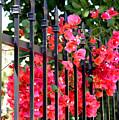 Elegant Fence by Carol Groenen