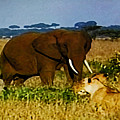Elephant And The Lions by Don Baker