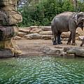 Elephant And Waterfall by Steven Jones