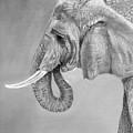Elephant by Arline Wagner