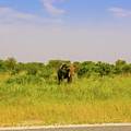 Elephant At The Road by Marek Poplawski