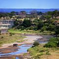 Elephant Crossing In Tarangire by Vicki Jauron