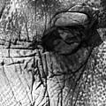 Elephant Eye by Gene Sizemore