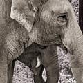 Elephant Family Portrait by Jean Noren