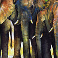 Elephant Herd by Paul Dene Marlor