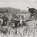 Elephant Hunters In The 19th Century by Vintage Design Pics