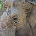 Elephant by Jay Billings
